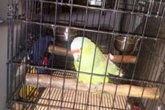 В Мексике попугай сдал своего пьяного хозяина полиции