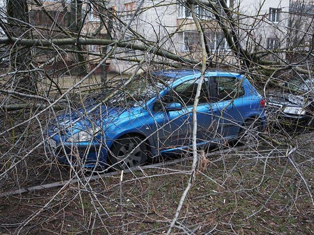 Падали деревья прямо на машины
