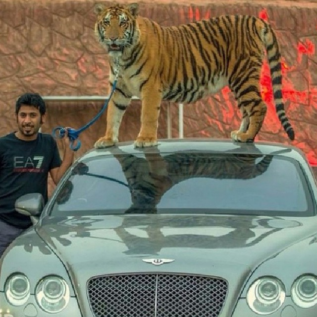 дикие животные и автомобили, фотосессия, коллекция шейха