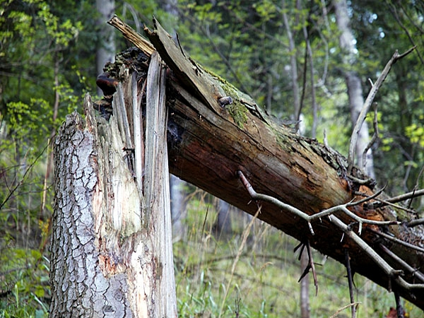мазда врезалась в дерево