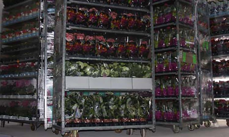 На белорусско-польской границе изъяли цветы на 2 млрд.