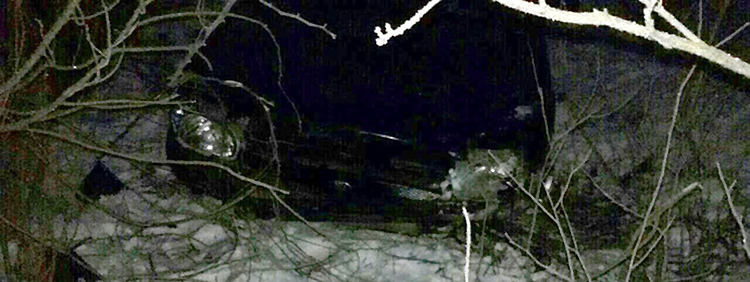 Пьяная женщина-водитель не справилась с управлением: в результате ДТП погиб ее муж