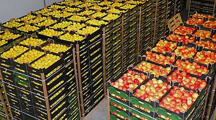 Сотрудники Брестской таможни пресекли незаконный ввоз в ЕАЭС фруктов на 900 млн