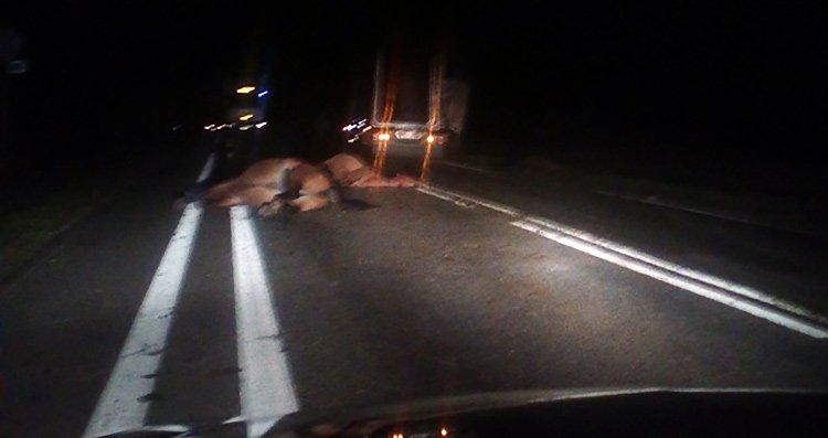 В Минской области под лесовоз попало несколько лошадей