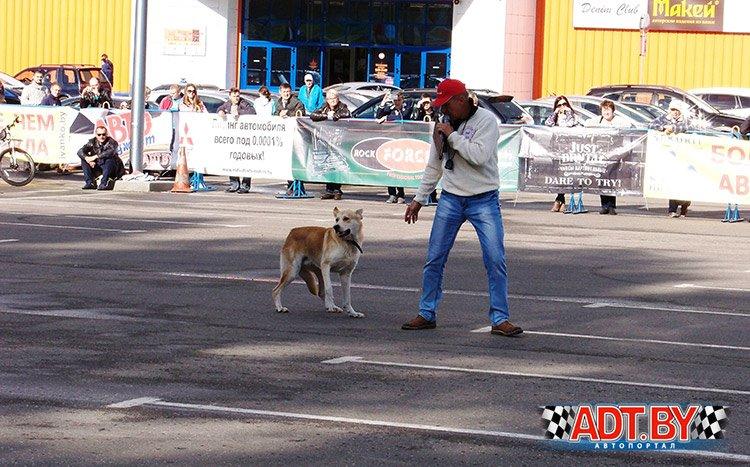 Неожиданно на трассе появилась собака и Шевченко Анатолию пришлось стать на время укротителем))