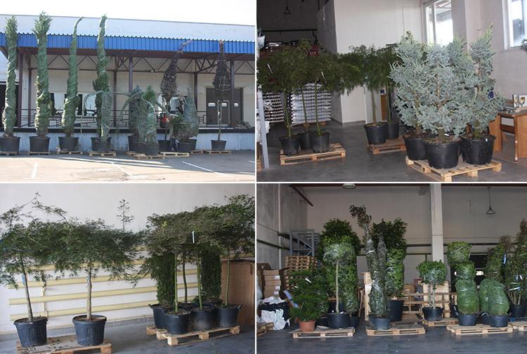"""В пункте пропуска """"Привалка"""" изъяли теплолюбивые растения"""
