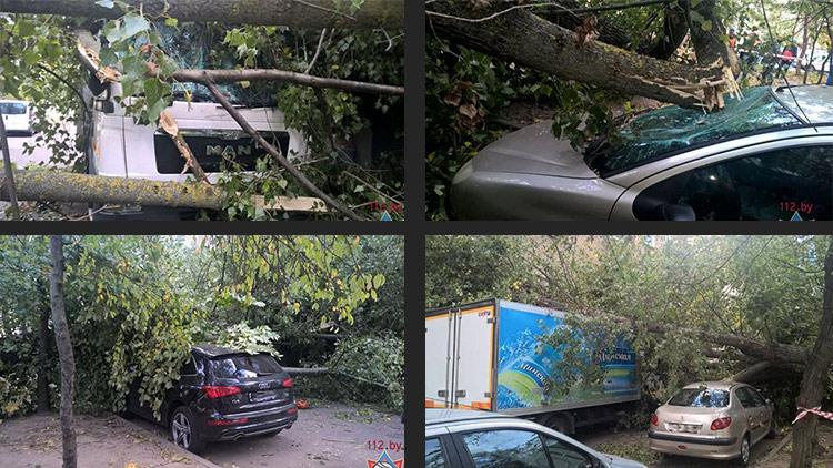 В Минске ветром повалило дерево на припаркованные автомобили