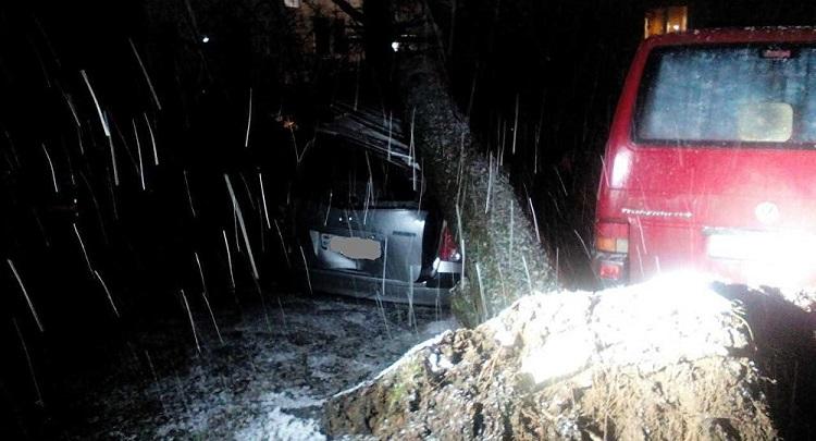 В Минске из-за ветра повреждено 8 автомобилей
