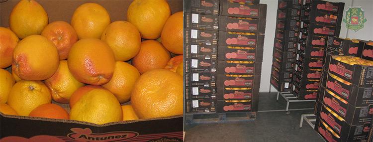 Гродненские таможенники изъяли около трех тонн грейпфрутов