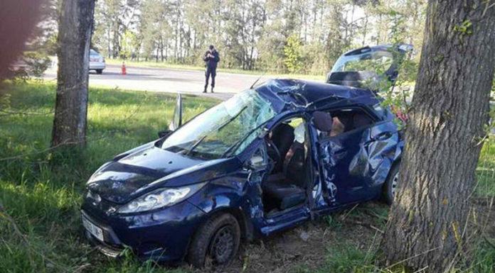 В Каменецком районе «Форд» въехал в дерево. В салоне находился ребенок