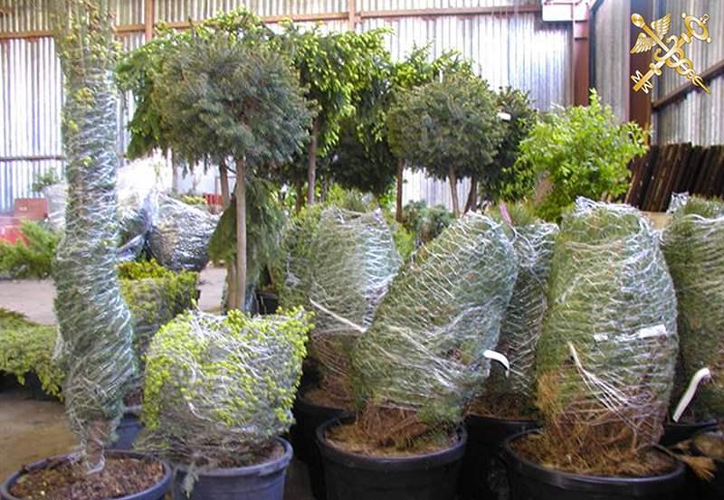 В пункте пропуска «Берестовица» задержана партия декоративных растений