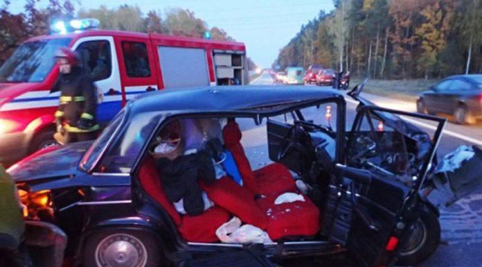 Возле Гомеля лось стал причиной ДТП с участием 3-х автомобилей