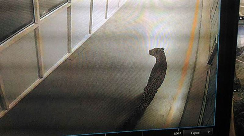 Леопард захватил автомобильный мегазавод