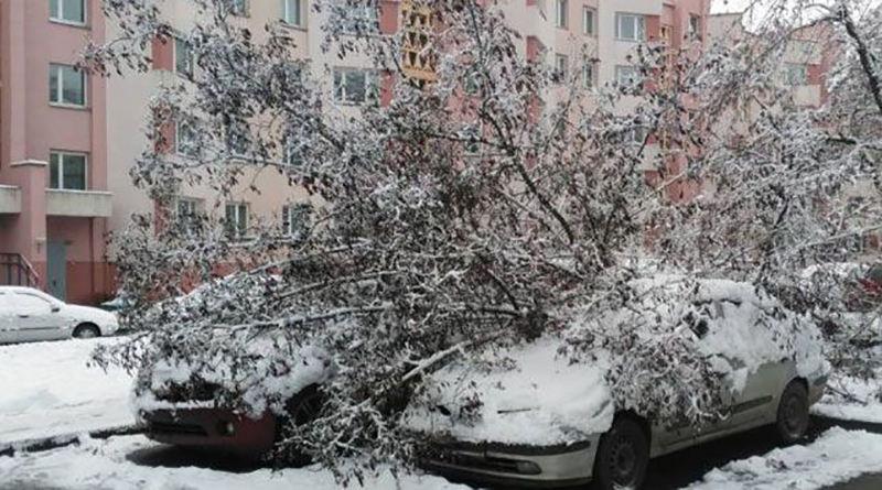 Упавшее из-за снега дерево повредило два автомобиля