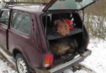 Браконьеры лишились двух авто за нелегальную охоту