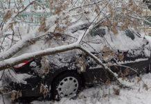 В Гомельской области упавшие деревья повредили более 10 машин