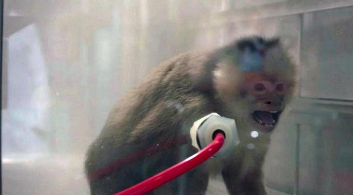 Топ-менеджер «Фольксвагена» назвал позором для концерна финансирование экспериментов над животны