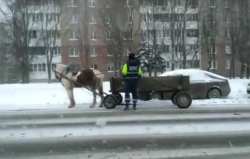 В метель по Минску на гужевой повозке!