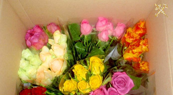 С начала года гродненскими таможенниками изъято цветов на сумму почти 70 тыс BYN