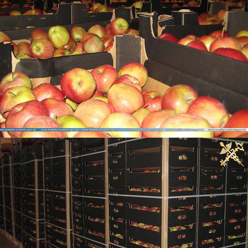 Более 19 тонн яблок перемещались по недействительным документам