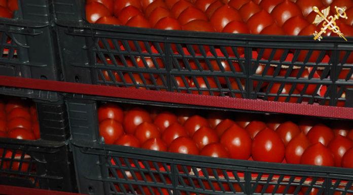 Более 21 тонны помидоров пытались вывезти из Беларуси