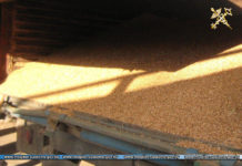 Более 63 тонн зерна незаконно перемещали по территорииЕАЭС
