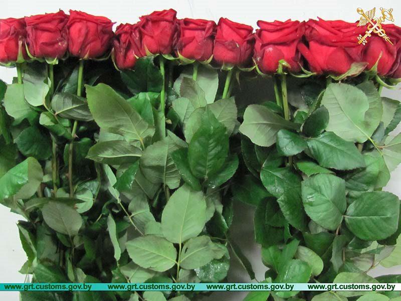 Пресечено 6 попыток незаконного ввоза живых роз