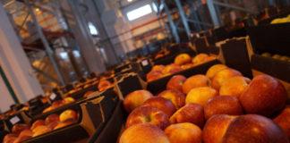 таможенники пресекли ввоз в Россию партии яблок и груш