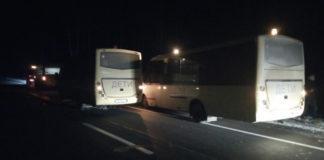 Под Червенем лоси стали причиной столкновения двух автобусов со школьниками.