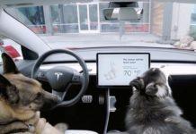 Tesla представила специальный режим для собак