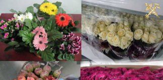 Более 200 тысяч цветов пытались незаконно ввезти на территорию ЕАЭС