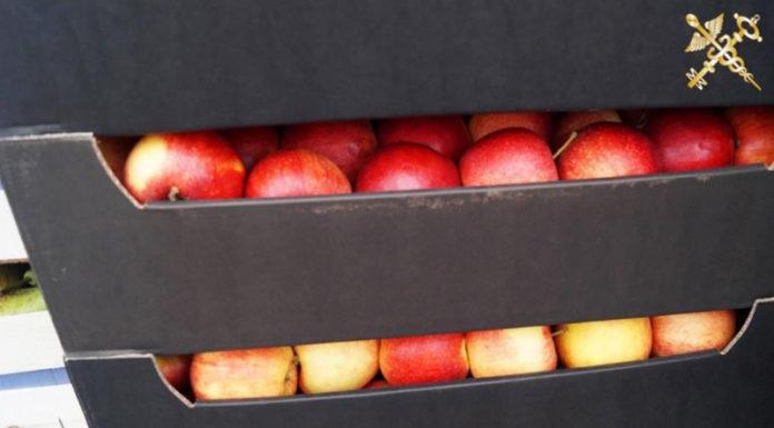 Россияне на восьми авто пытались незаконно вывезти яблоки из Беларуси