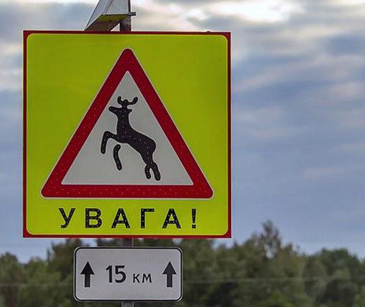 На трассе М6 установят дорожные знаки, отпугивающие животных