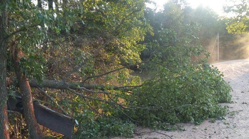 В Кобринском районе пьяный бесправник врезался в дерево.