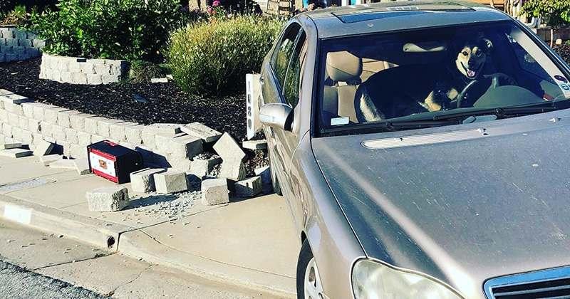 Собака угнала Mercedes-Benz и попала в ДТП