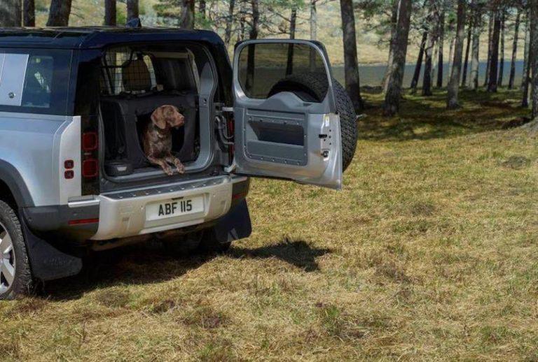 Лабрадор помогает проверить покрытие Jaguar Land Rover