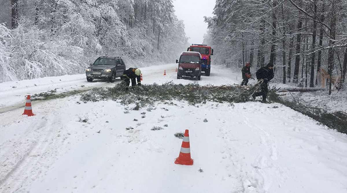 деревья повредили авто