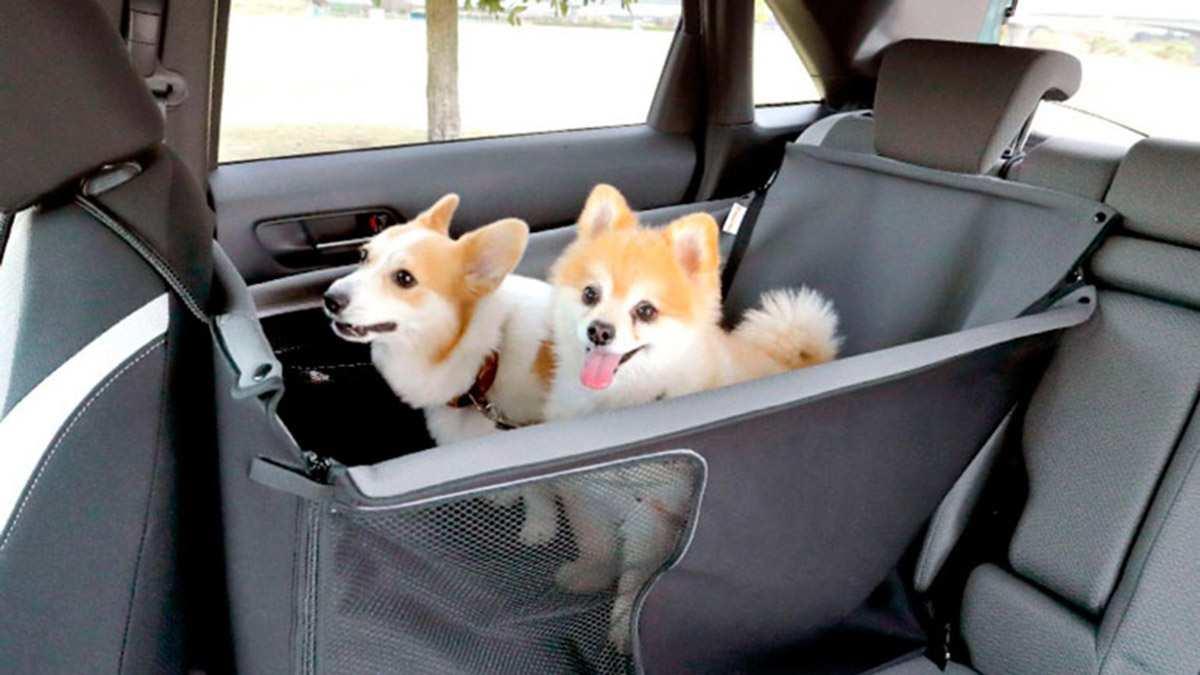 Honda для собак