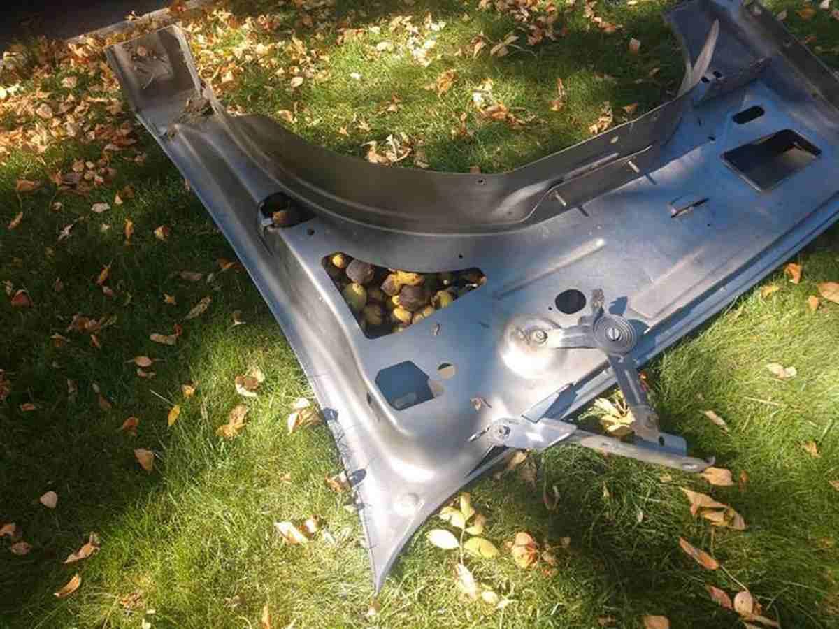 белка спрятала орехи в авто